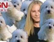 Barbra Streisand Had Her Dog Cloned…Twice – IGN News